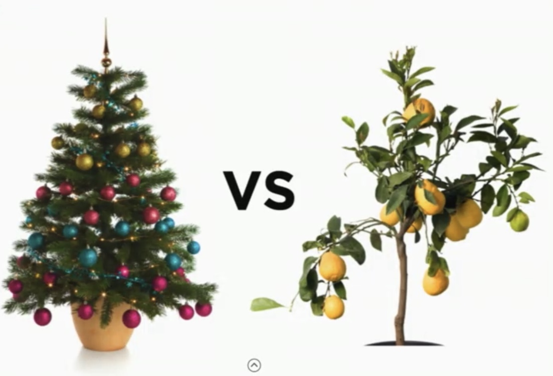 Christmas tree or fruit tree?